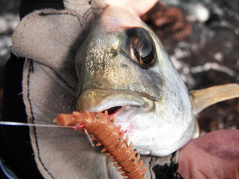 на что клюет рыба в реке